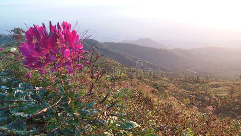 O parque tem boas flores bonitas imagens de stock royalty free
