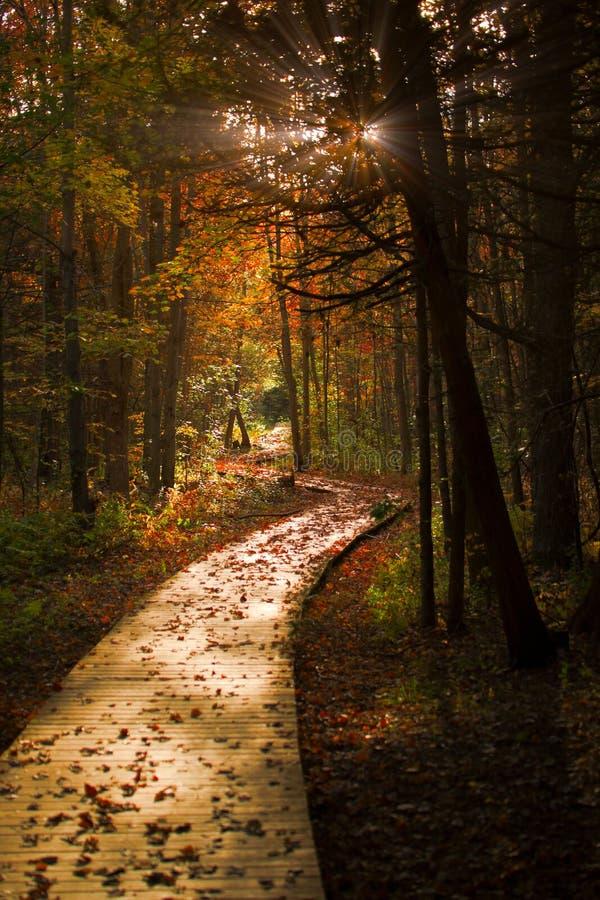 O passeio à beira mar de madeira corta completamente uma floresta escura do outono imagem de stock royalty free
