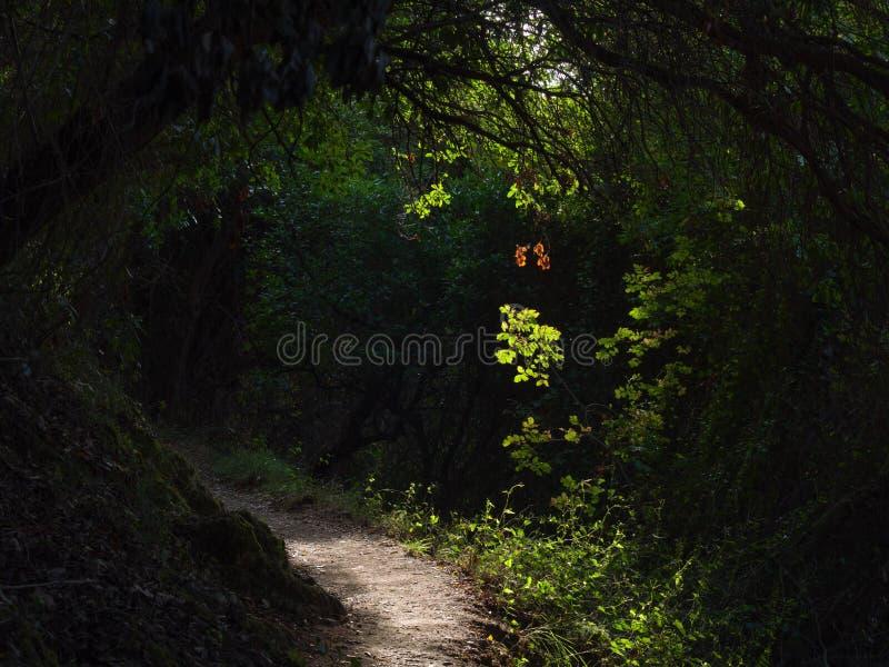 O passeio cercado pela vegetação, o sol filtra com imagem de stock