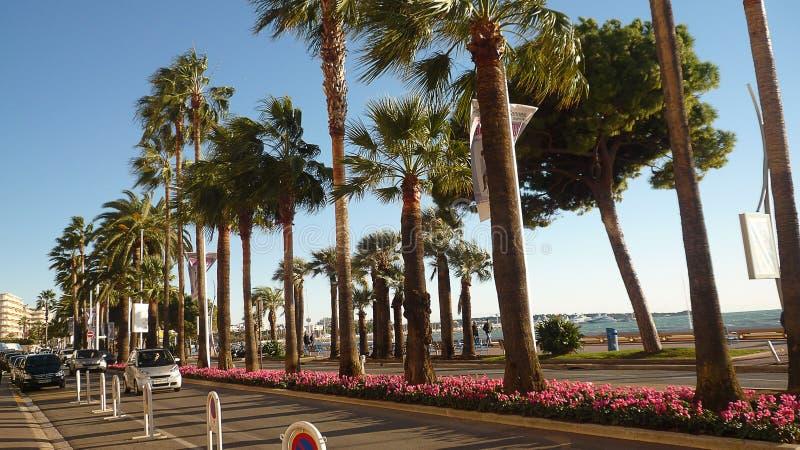 O passeio de la Croisette em Cannes fotografia de stock royalty free