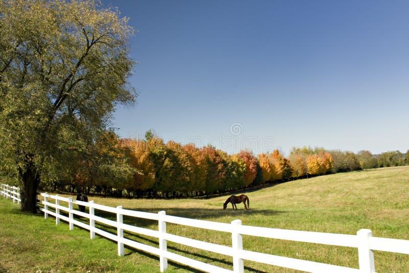 O pasto alinhou com árvores coloridas fotografia de stock
