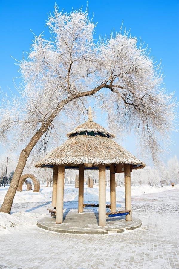 O pavilhão e a árvore com escarcha imagens de stock royalty free