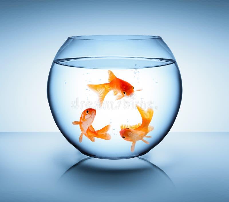 O peixe dourado recicla dentro o conceito fotografia de stock