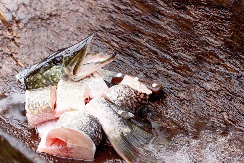 O peixe fresco cru ? um pique, travado e massacrado na natureza da captura do pescador imagens de stock