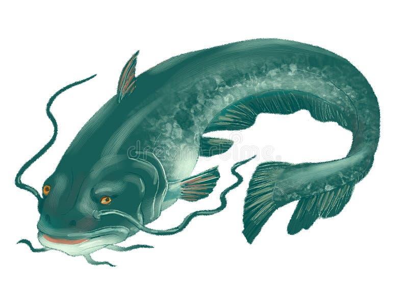 O peixe-gato grande ilustração do vetor