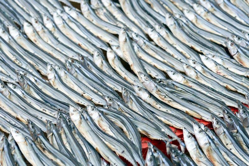O peixe secado é arranjado em um arranjo bonito e em ordem Pode ser usado como matérias primas para cozinhar o tanto como imagem de stock