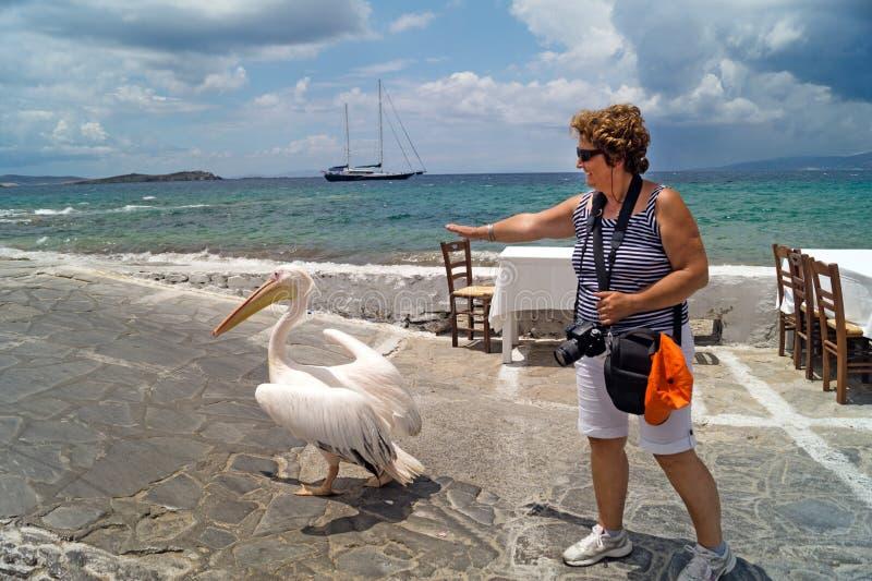 O pelicano famoso da ilha de Mykonos fotos de stock royalty free