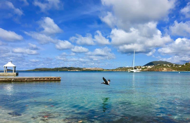 O pelicano voa baixo fotos de stock royalty free