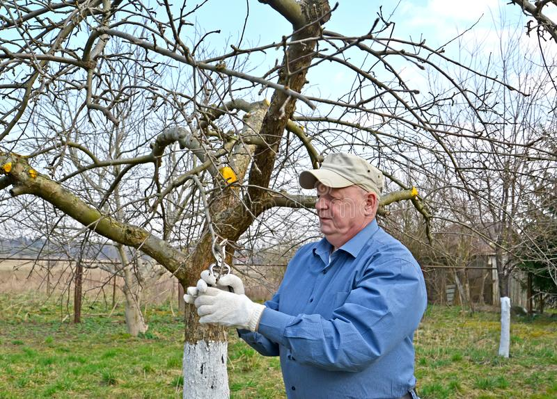 O pensionista corta ramos da Apple-?rvore com secateurs A mola funciona em um jardim imagem de stock royalty free
