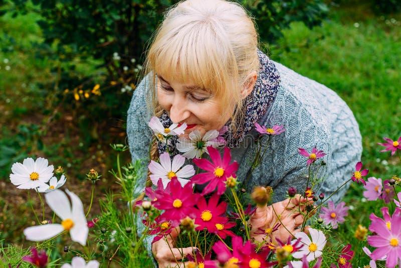 O pensionista louro atrativo da mulher em um casaco de lã cinzento aspira o cosmos de florescência no verão no jardim imagem de stock royalty free