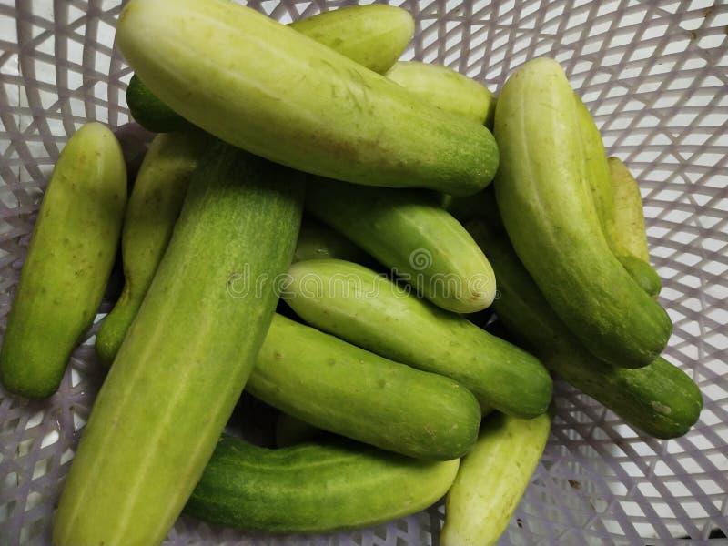 O pepino ou a melão é um vinho da família Cucurbitaceae Originárias da Índia fotografia de stock
