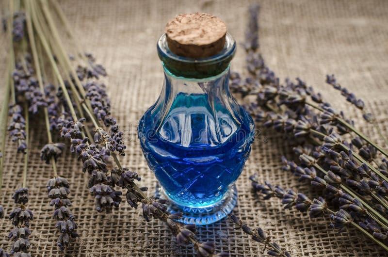 O perforatum erval de Medicine Conceito da medicina alternativa Ingridients naturais orgânicos secos imagens de stock royalty free