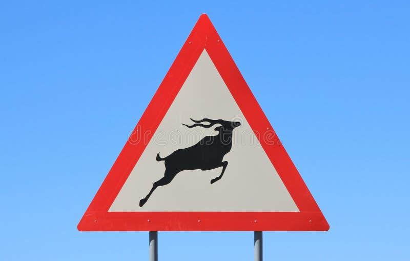 O perigo - Kudu e sinal de estrada do cruzamento dos animais selvagens - porcos de estrada olha para fora para os porcos foto de stock