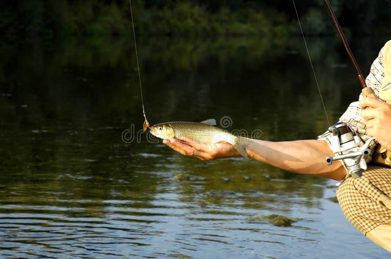 O pescador apenas travou um peixe imagem de stock royalty free