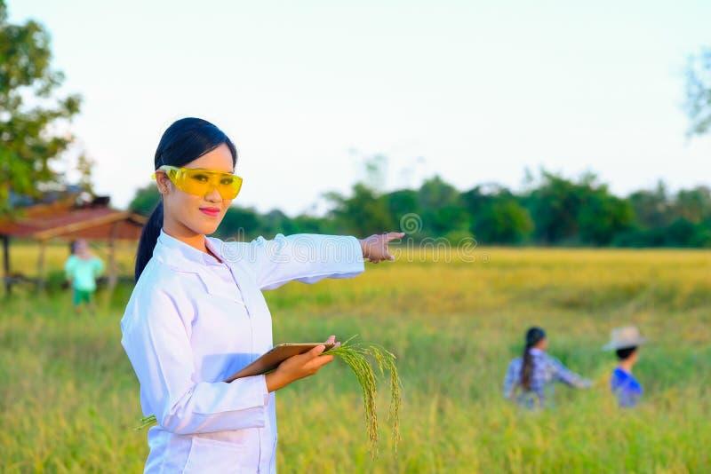 O pesquisador das mulheres está monitorando a qualidade do arroz no foto de stock