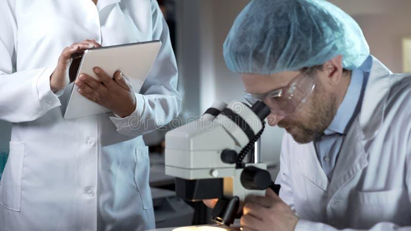 O pesquisador que trabalha com microscópio, a gravação assistente comenta na tabuleta imagens de stock