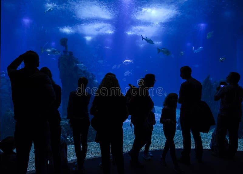 O pessoa mostra em silhueta o interior de Lisboa Oceanarium fotos de stock