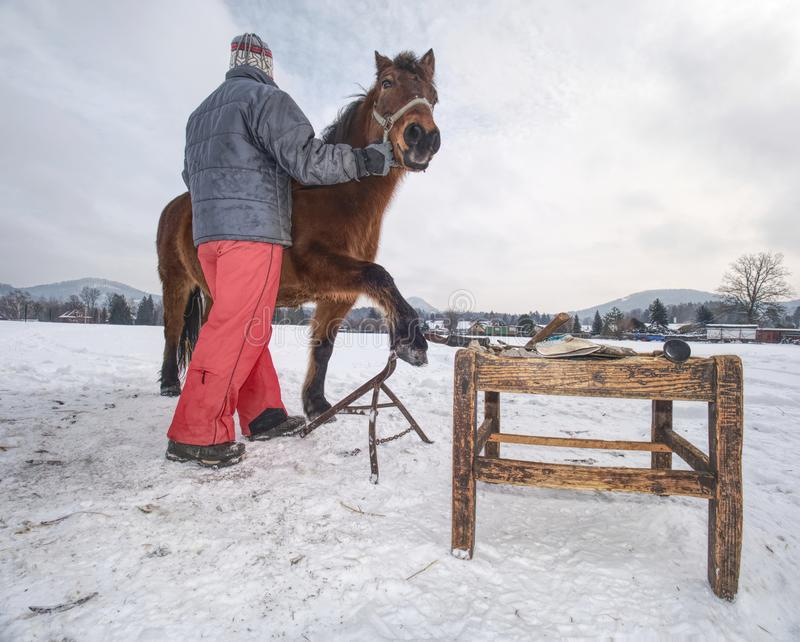 O pessoal da exploração agrícola prepara o cavalo para os cascos que cancelam pelo backsmith imagens de stock
