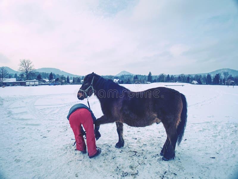 O pessoal da explora??o agr?cola prepara o cavalo para os cascos que cancelam pelo backsmith fotos de stock
