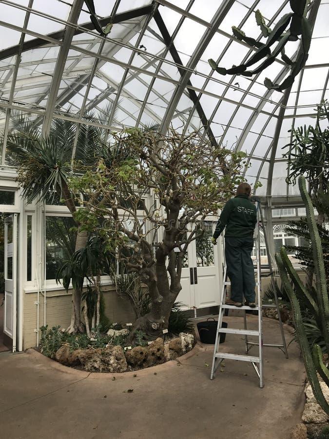 O pessoal nos jardins botânicos NYC de Bronx importa-se com plantas tropicais fotografia de stock