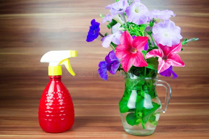 O petúnia colorido floresce em um jarro de vidro com lata molhando foto de stock royalty free