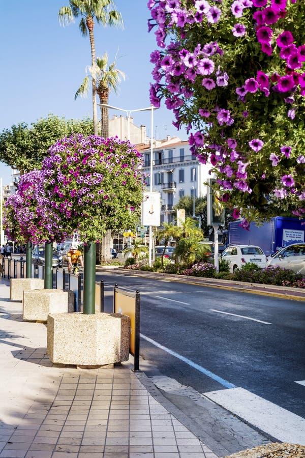 O petúnia da rua floresce para a decoração em Cannes, França fotografia de stock royalty free