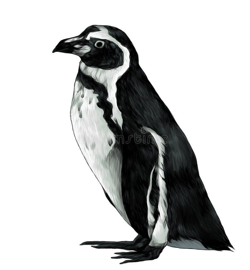 O pinguim está na altura completa lateralmente no perfil ilustração stock