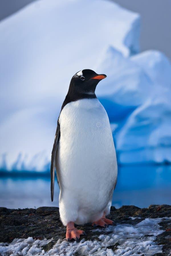 O pinguim tem o divertimento imagens de stock