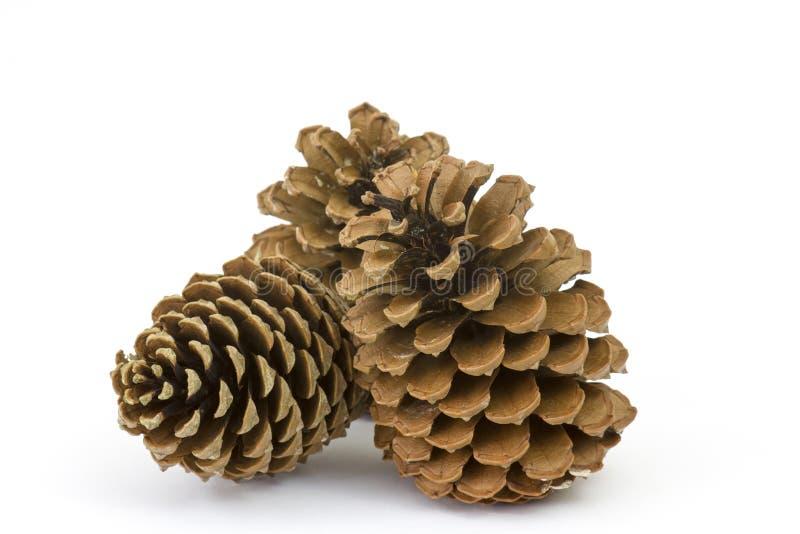 O pinho dos cones em um branco foto de stock royalty free