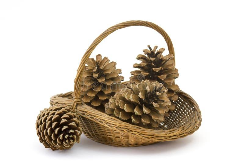 O pinho dos cones em uma cesta em um branco fotografia de stock royalty free