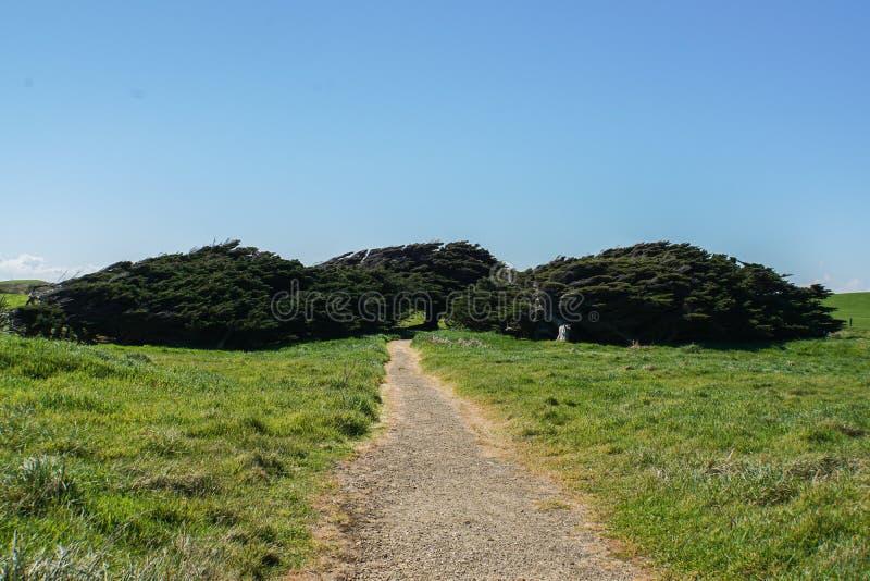 O pinho e outras árvores na inclinação apontam em Nova Zelândia imagem de stock
