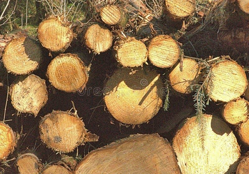 O pinho entra o formulário Amber Abstract Patterns da estrada de tronco foto de stock royalty free