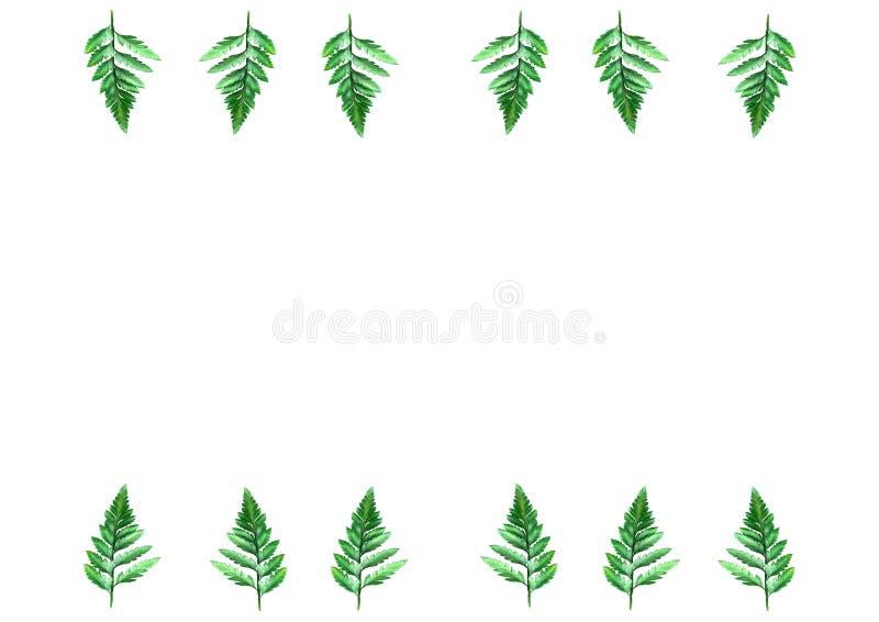 O plano coloca no fundo branco para as folhas do texto e da samambaia, vista superior, espaço para o texto, espaço da cópia, fotografia de stock royalty free