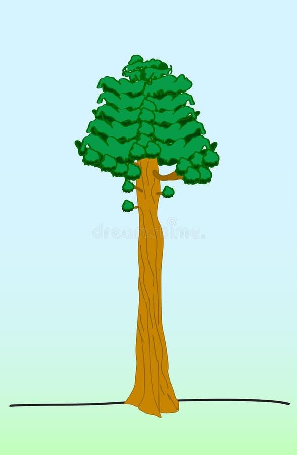 O plano da árvore da sequoia solated na ilustração do vetor do baickground do verde azul ilustração stock