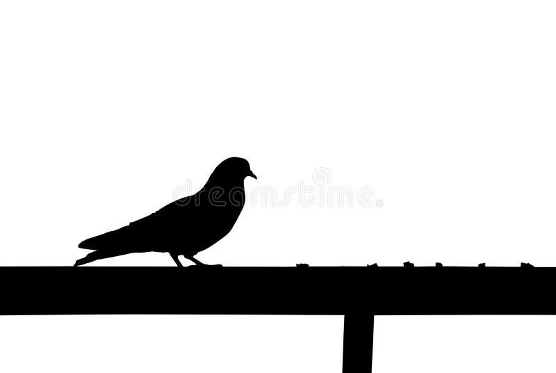 O pombo está indo comer imagem de stock