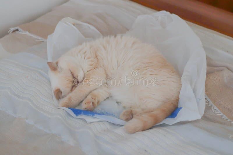 O ponto vermelho da cor bege do gato dorme docemente em um saco de plástico imagem de stock