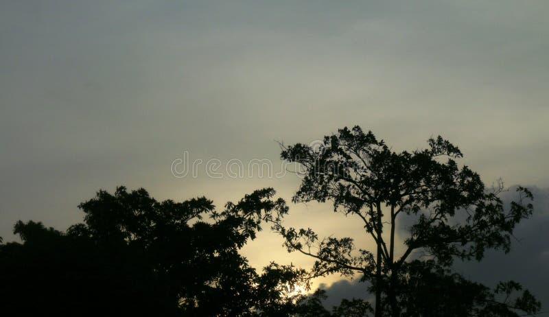 O por do sol, árvore do fundo da floresta da silhueta do céu noturno, fundo do céu da manhã podia temperar o inverno fotos de stock