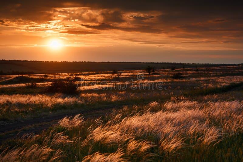 O por do sol bonito está no campo, as flores e a grama selvagem, a luz solar e as nuvens escuras fotos de stock