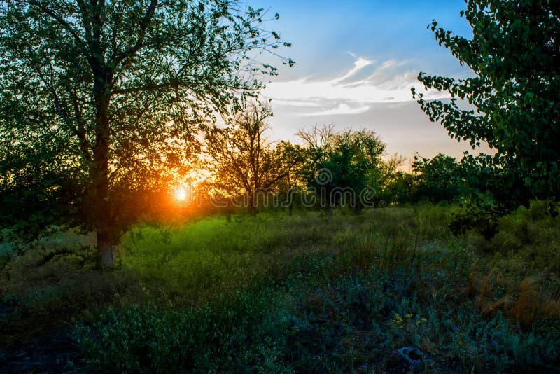 O por do sol da noite imagens de stock