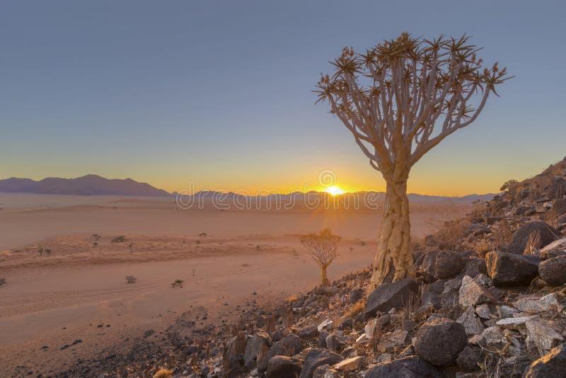 O por do sol em treme a árvore entre rochas foto de stock