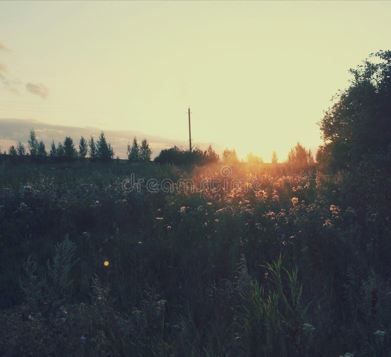 O por do sol está no campo foto de stock