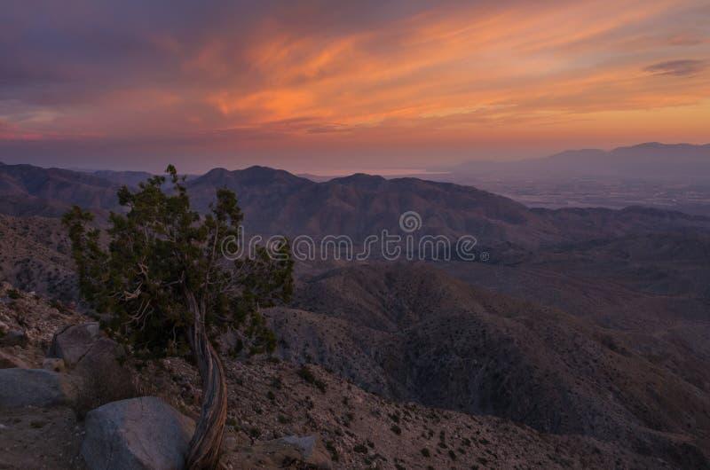 O por do sol fecha a vista, Joshua Tree National Park 2 fotos de stock