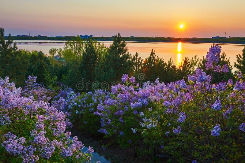 O por do sol lilás roxo da beira do lago imagens de stock royalty free