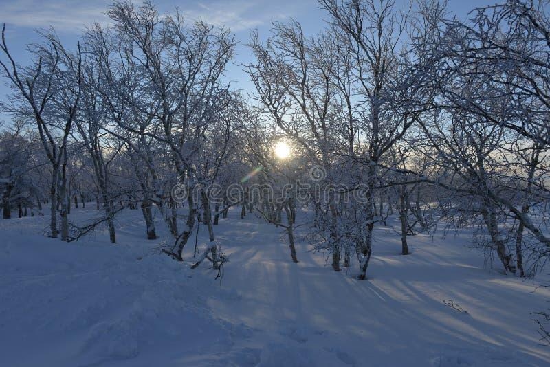 O por do sol na floresta nevado em Heilongjiang, China fotos de stock