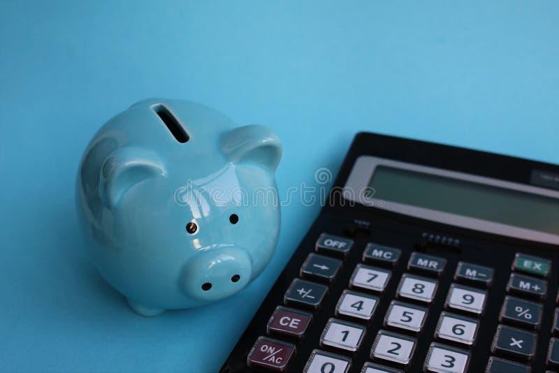 O porco leitão leitão está modestamente na calculadora fotografia de stock