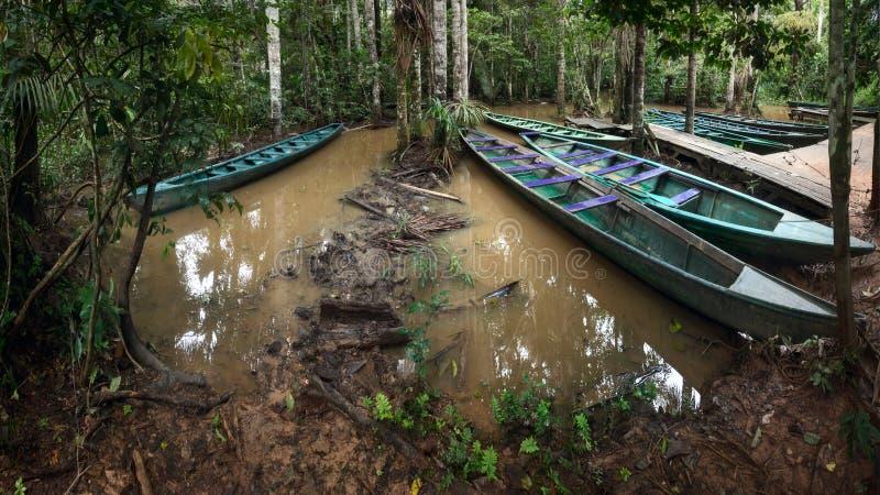 O porto da floresta úmida no lago Sandoval perto de Puerto Maldonado, Peru das Amazonas imagens de stock