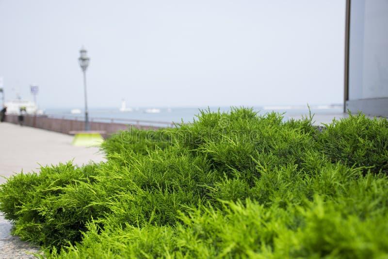 O porto de Odessa imagens de stock