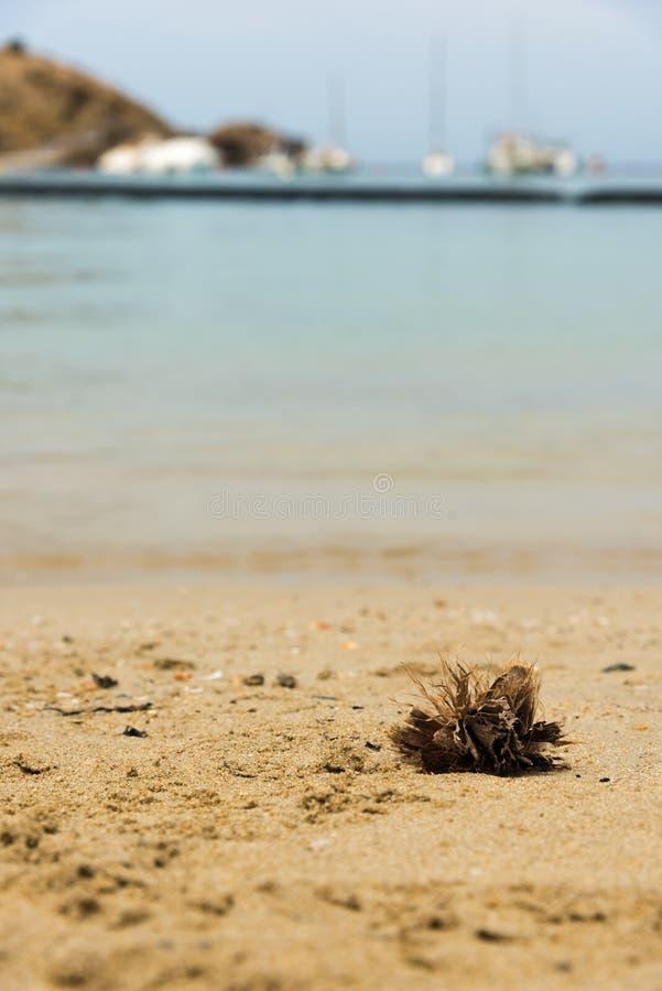 O porto pequeno do veleiro na costa em Ibiza foto de stock