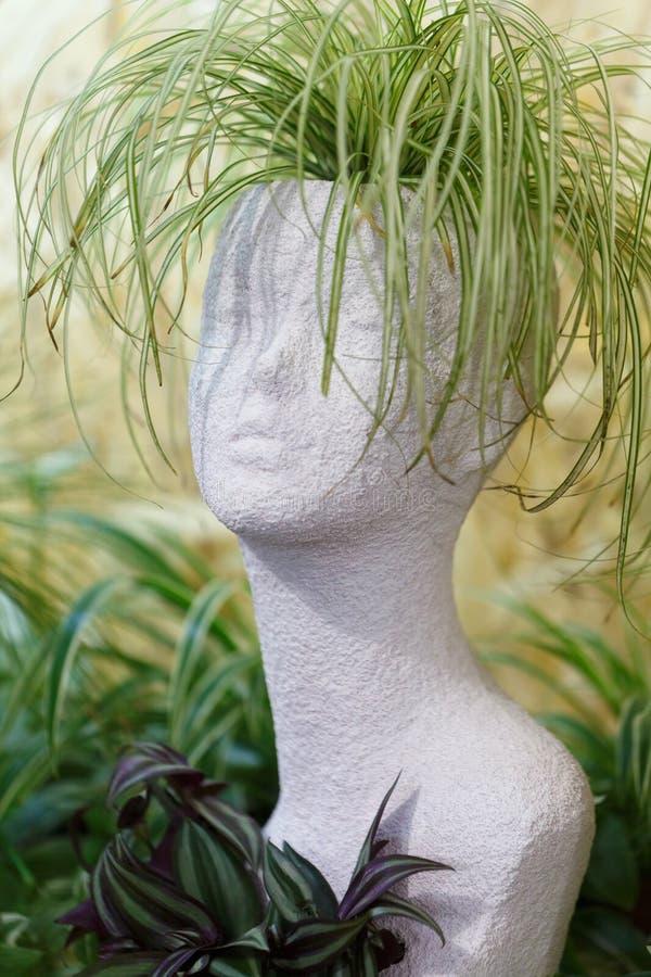 O potenciômetro para flores da casa é feito tem a forma da cabeça da de uma menina bonita As folhas finas das flores crescem na c fotos de stock
