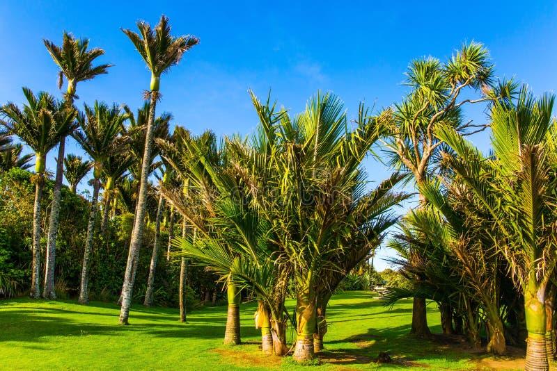 O prado em um bosque da palma fotos de stock